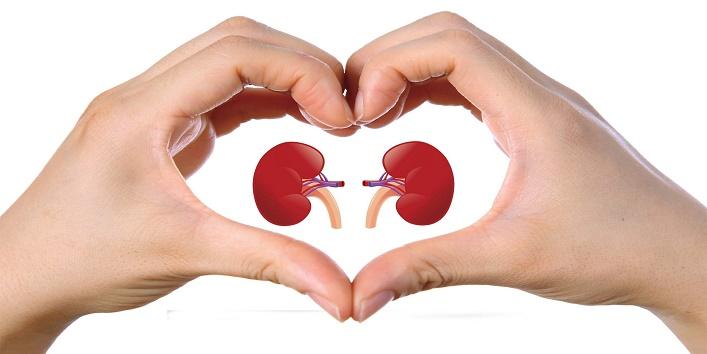 Promotes kidney health