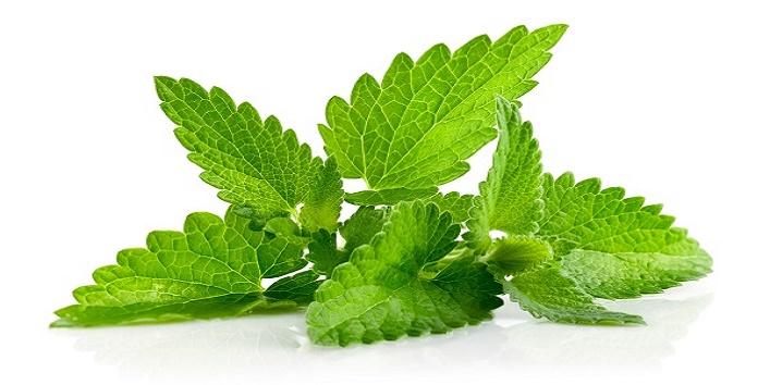 Mint leaf toner