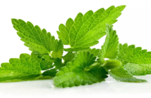 Beauty Benefits of Mint Leaves